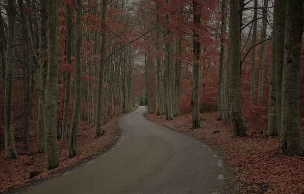 Picture road, autumn, forest, trees, nature, foliage, Sweden, Robert Gustavsson Photography, gloomy day