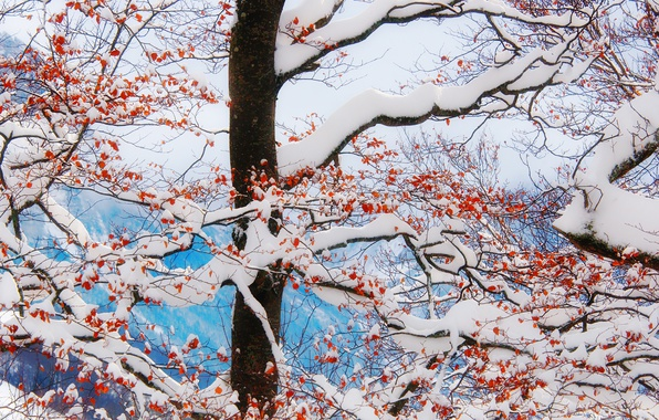 Picture winter, mountains, clouds, snow, leaves, tree, freeze, branches, frost