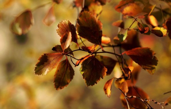 Picture autumn, macro, foliage, branch, Janet рhotography