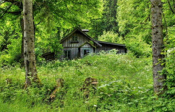 Picture forest, grass, trees, house, wooden, old, hut