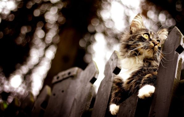 Picture cat, the fence, blur, bokeh