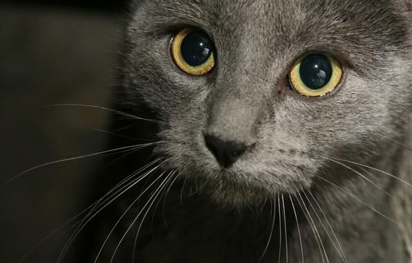 Picture cat, mustache, look, cats, face, pretty