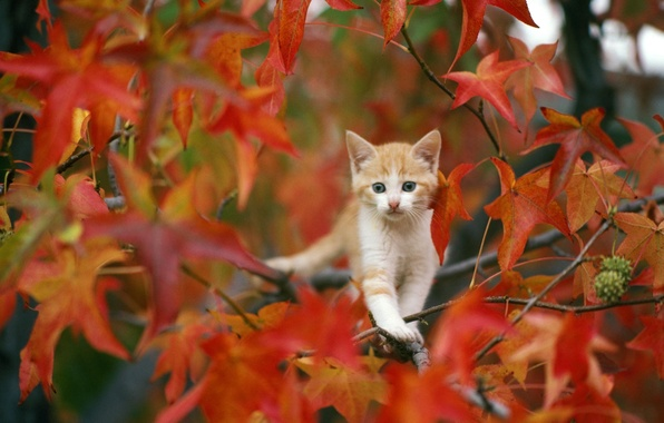 Picture autumn, leaves, kitty