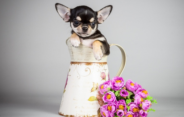 Picture flowers, dog, bouquet, puppy, pitcher, puppy, flowers, bouquet, pitcher, the dog
