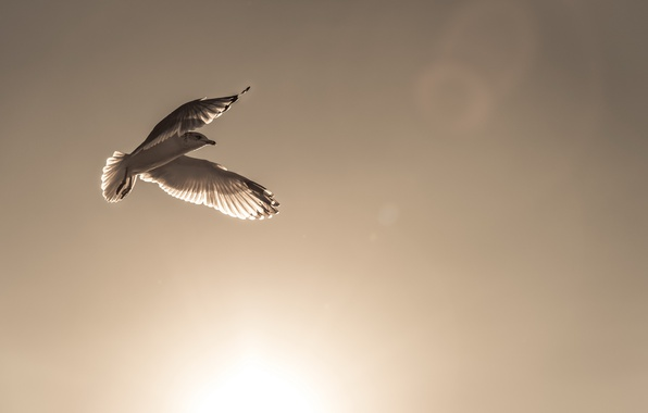 Picture the sky, bird, the world