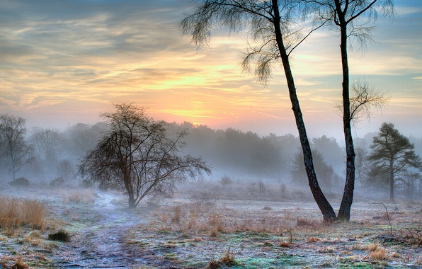 Picture winter, frost, snow, nature, fog, morning