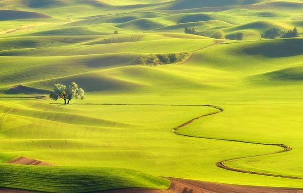 Picture field, grass, trees, hills, haze