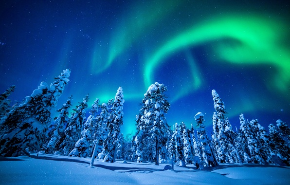 Picture photo, Nature, Winter, Snow, Spruce, Lights