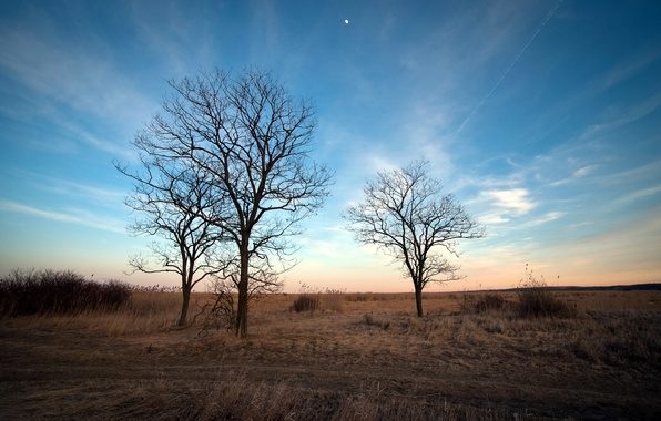 Picture trees, landscape, nature, spring