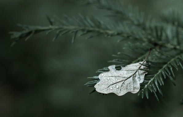 Picture water, drops, trees, sheet, Rosa, tree, widescreen, Wallpaper, drop, wallpaper, leaves, leaf, trees, wood, widescreen, …