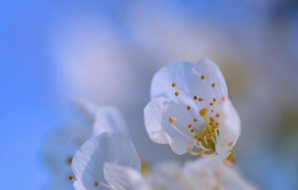 Picture flower, the sky, petals, garden