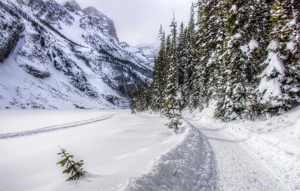 Picture road, forest, snow, mountains, trees, landscape, nature, winter, mountains, snow, winter day, path, peaceful