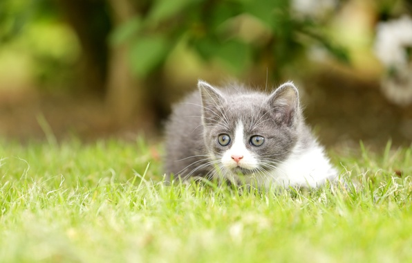 Picture grass, look, kitty, bokeh