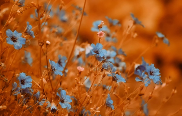 Picture background, flowers, bokeh