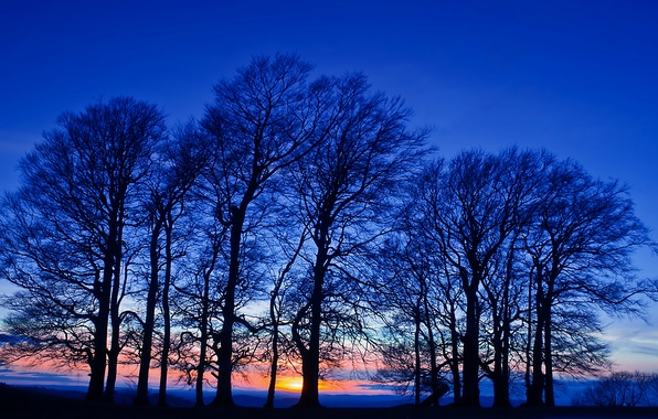 Picture field, the sky, trees, sunset, orange, The evening, twilight, blue