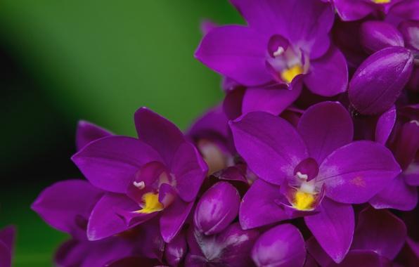 Picture macro, petals, purple, Orchid