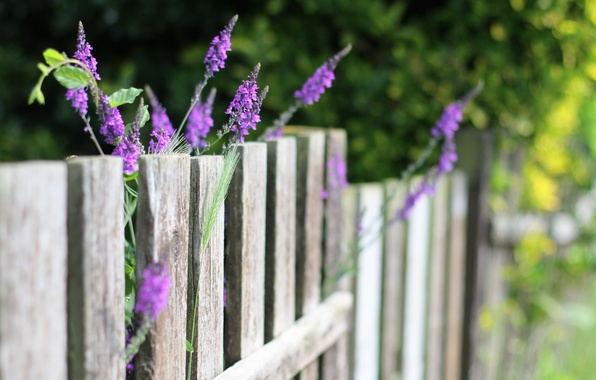 Picture summer, flowers, the fence