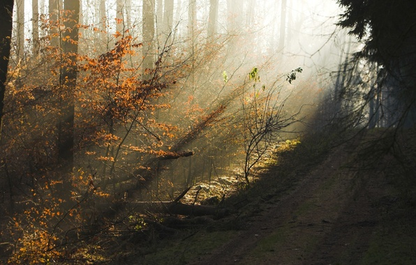 Picture road, autumn, forest, trees, beauty, the evening, morning, haze, the sun's rays