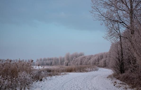 Picture winter, road, landscape