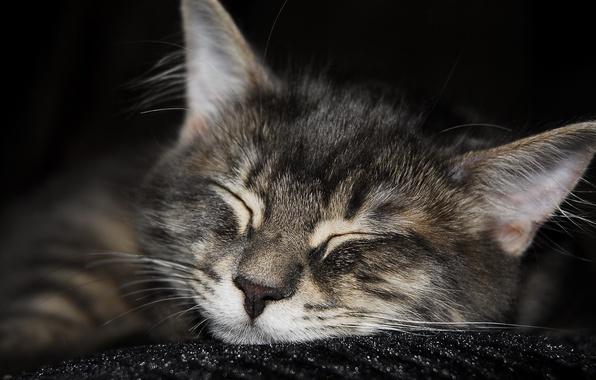 Picture Koshak, sleeping