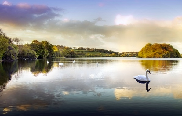 Picture water, lake, pond, Park, swans