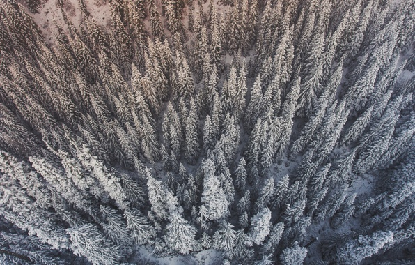 Picture winter, forest, snow, trees, the view from the top