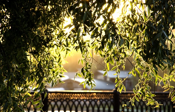 Picture foliage, the evening, Golden leaves