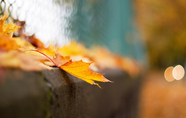 Picture autumn, macro, sheet, mesh, the fence, bokeh