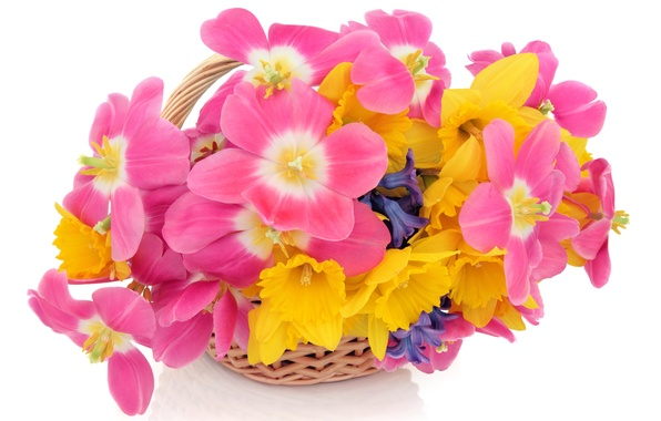 Picture white, flowers, background, tulips, basket, daffodils