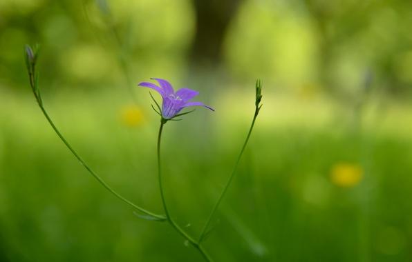 Picture flower, background, lilac, blur, stem