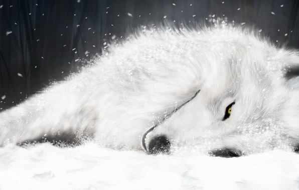Picture figure, wolf, White, Wolf's Rain, Kiba, supermonchi