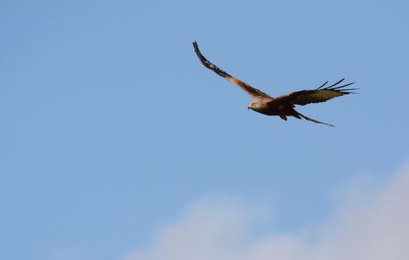 Picture the sky, flight, bird, eagle