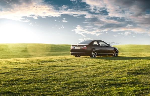 Picture grass, BMW, black, green, rear, E46, green grass, 3 Series