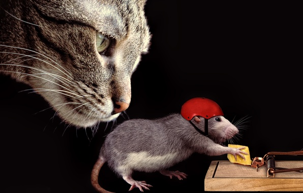 Picture cat, cat, face, the situation, cheese, mousetrap, helmet, rat