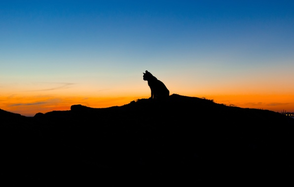 Picture cat, the sky, sunset, animal, silhouette, sitting