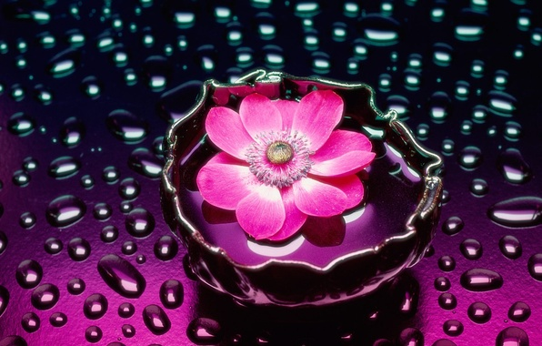 Picture flower, water, vase