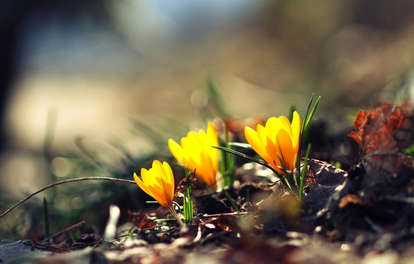 Picture greens, flower, flowers, yellow, background, Wallpaper, blur, wallpaper, flowers, widescreen, flowers, background, bokeh, full screen, ...