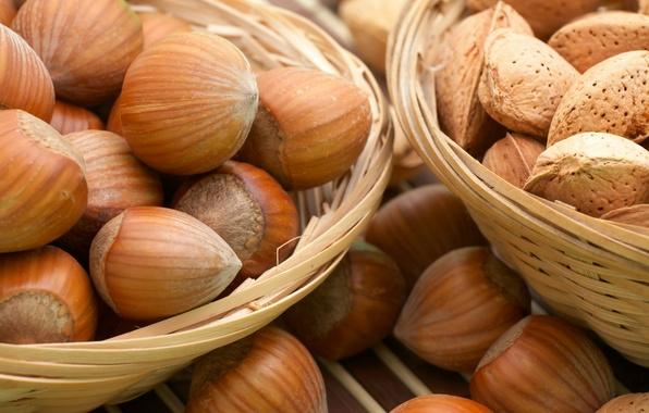Picture bone, yummy, hazelnuts, Nuts, forest