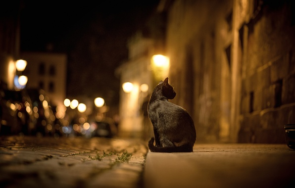 Picture road, cat, cat, night, the city, lights, street, pavers, black, the sidewalk, bokeh