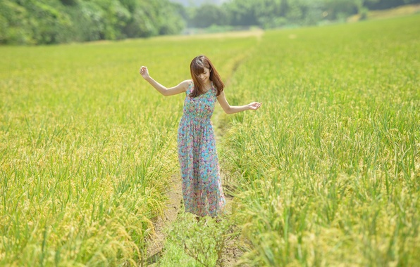 Picture field, forest, grass, girl, dress, girl, grass, forest, dress, field, smiling, smiling