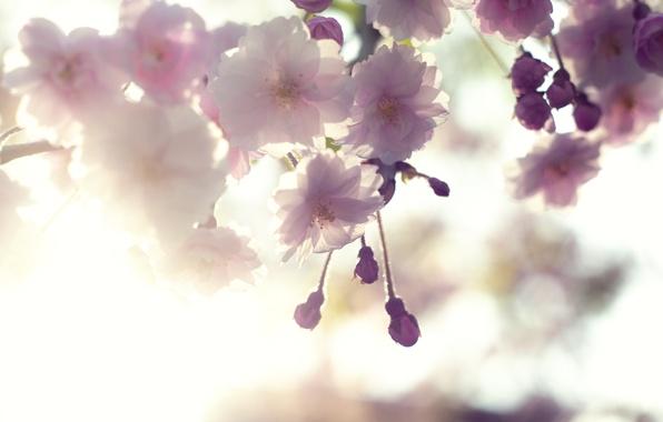 Picture the sky, macro, light, flowers, cherry, tenderness, branch, spring, petals, Sakura, pink, white, flowering