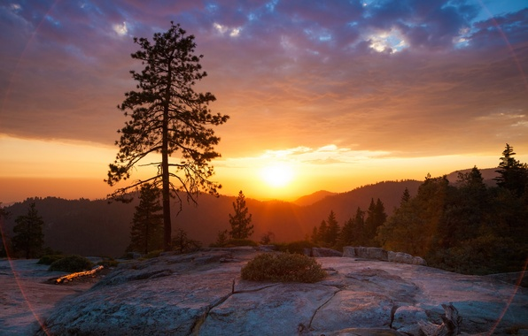 Picture sunset, nature, Park, photo, dawn, CA, USA, Sequoia