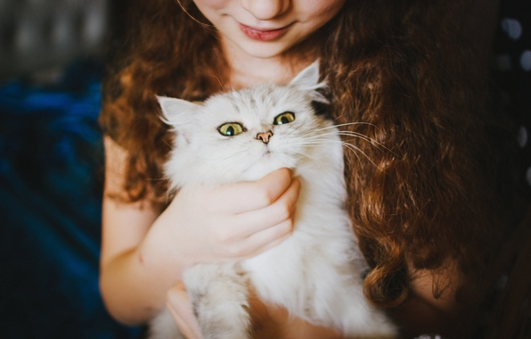 Picture white, cat, girl, looks