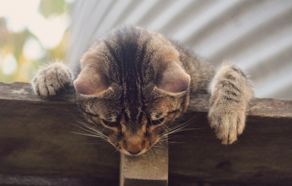 Picture cat, grey, striped, curiosity
