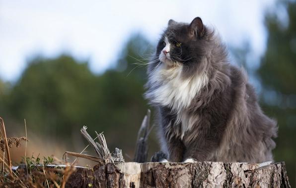 Picture cat, nature, stump