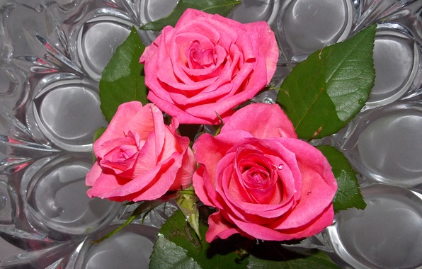 Picture photo, Flowers, Three, Pink, Roses
