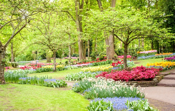 Picture greens, trees, flowers, Park, lawn, spring, tulips, Netherlands, daffodils, Keukenhof
