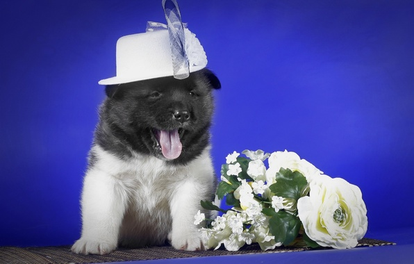 Picture flowers, puppy, hat