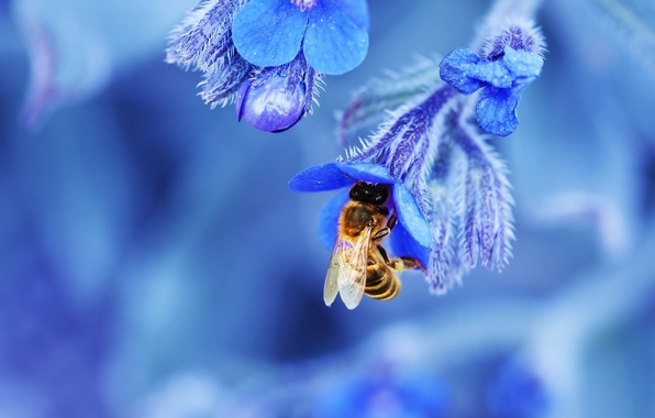 Picture flower, nature, bee, petals, insect
