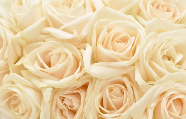 Picture flowers, background, roses, plants, pastel, pastel